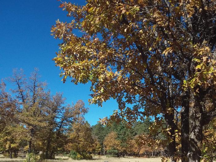 Trees at aspen