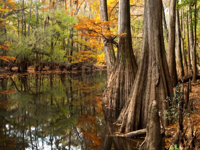 Preview photo of Congaree National Park Ranger-Guided Canoe Tours