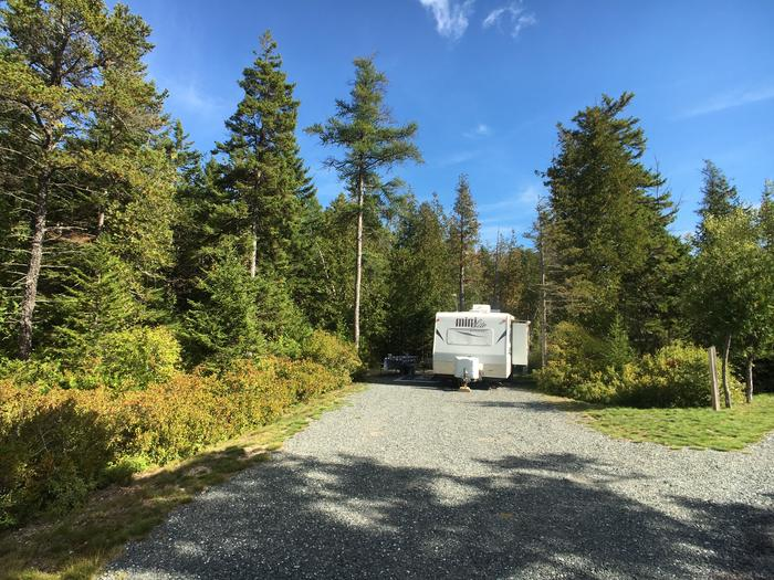 A photo of Site A11 While OccupiedA photo of Site A11 of Loop A-Loop at Schoodic Woods Campground with Picnic Table, Electricity Hookup, Fire Pit