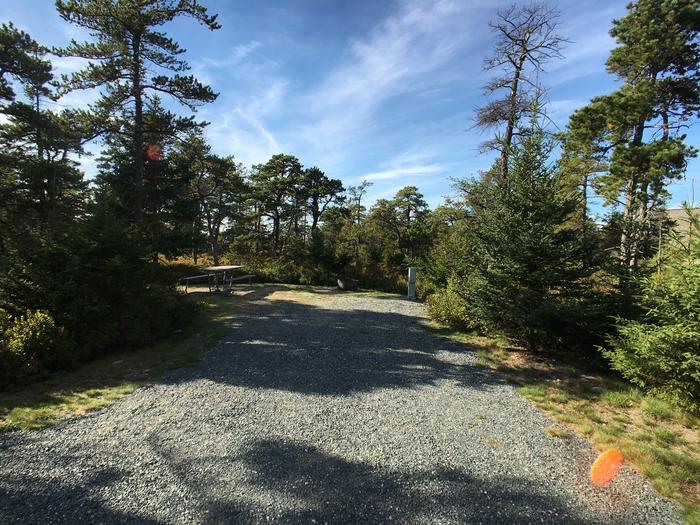A photo of Site A13 As Viewed From The RoadA photo of Site A13 of Loop A-Loop at Schoodic Woods Campground with Picnic Table, Electricity Hookup, Fire Pit
