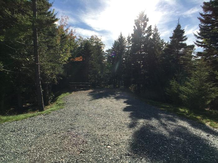 A photo of Site A45 as Viewed From The RoadA photo of Site A45 of Loop A-Loop at Schoodic Woods Campground with Picnic Table, Electricity Hookup, Fire Pit
