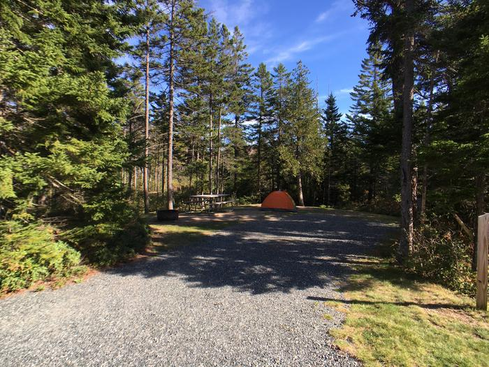 A photo of Site A49 while OccupiedA photo of Site A49 of Loop A-Loop at Schoodic Woods Campground with Picnic Table, Electricity Hookup, Fire Pit