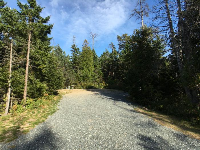 A photo of Site A42 As Viewed From The RoadA photo of Site A42 of Loop A-Loop at Schoodic Woods Campground with Picnic Table, Electricity Hookup, Fire Pit