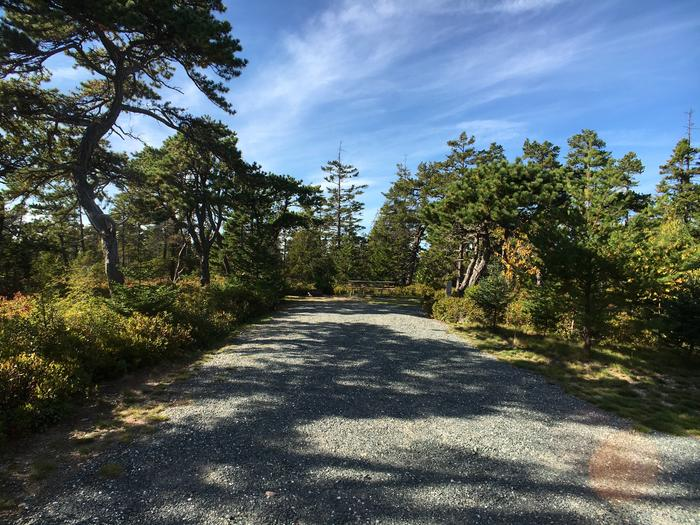 A photo of Site A24 As Viewed From The RoadA photo of Site A24 of Loop A-Loop at Schoodic Woods Campground with Picnic Table, Electricity Hookup, Fire Pit