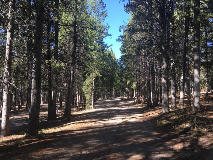 A photo of Site 62 of Loop G at Colter Bay RV Park with Full Hookup