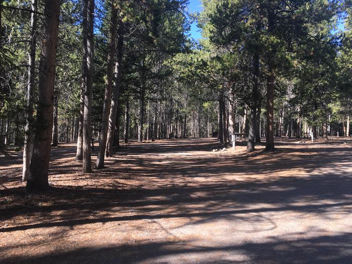 A photo of Site 46 of Loop D at Colter Bay RV Park with Full Hookup