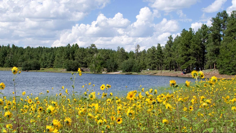 Welocme to Dogtown LakeSummer Flowers overlook Lake shore