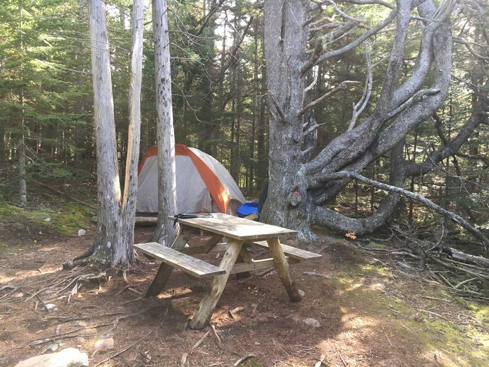 A photo of Site H06 of Loop Hike-In at Schoodic Woods Campground with Picnic Table, Shade, Tent Pad