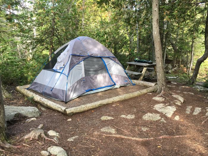 A photo of Site H08 of Loop Hike-In at Schoodic Woods Campground with Picnic Table, Shade, Tent Pad