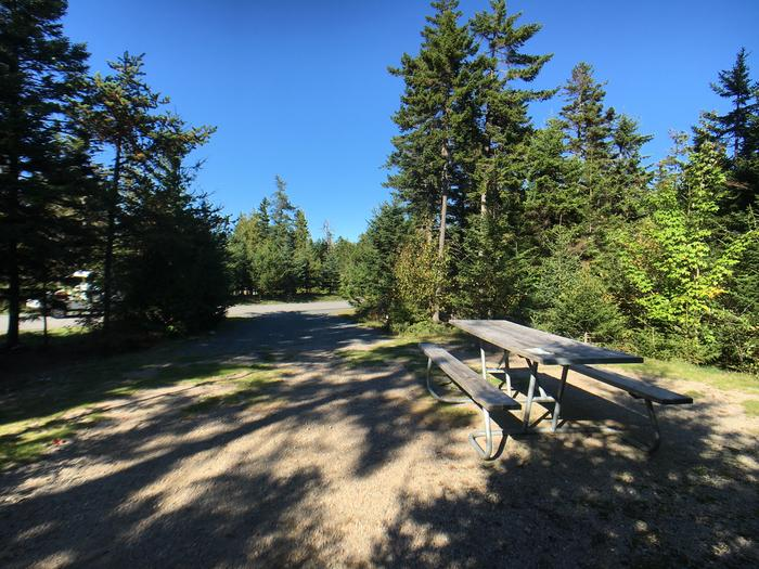 A photo of Site A20 of Loop A-Loop at Schoodic Woods Campground with Picnic Table, Electricity Hookup, Fire Pit
