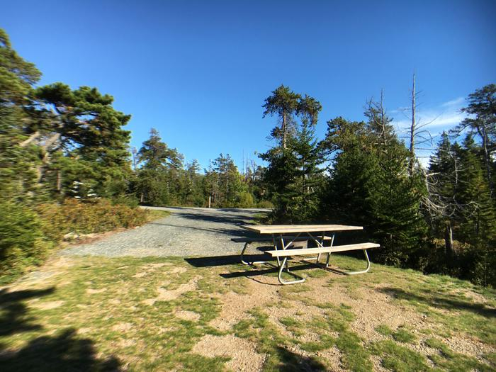 A photo of Site A25 of Loop A-Loop at Schoodic Woods Campground with Picnic Table, Electricity Hookup, Fire Pit