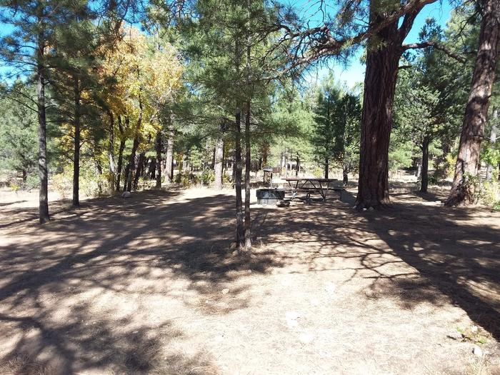 Hermit Loop Site 38 partially shaded with picnic table, grill and fire pit