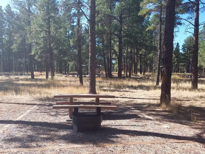 Loop C Campsite 37 partially shaded with a picnic table and fire ring