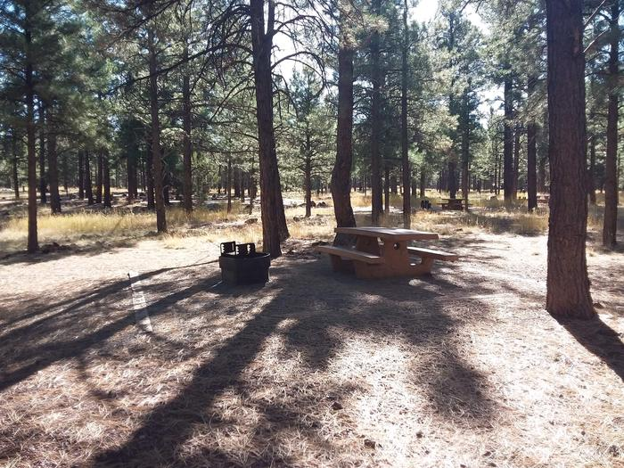 Loop C Campsite 39 partially shaded with a picnic table and fire ring