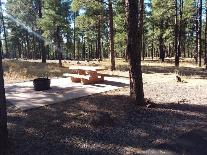 Loop C Campsite 45 partially shaded with a picnic table and fire ring