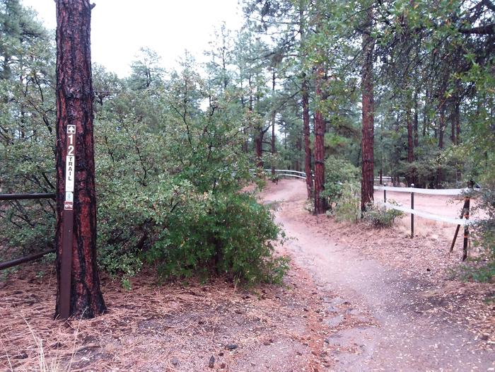 ALTO PIT Trail and greenery