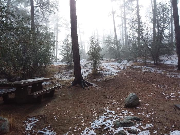 Campsite 37 with a picnic table surrounded by woods