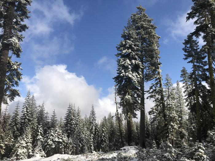 Preview photo of Tahoe National Forest Christmas Tree Permits