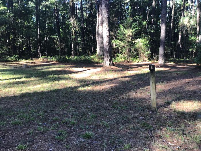 A photo of Site Site 08 of Loop Rocky Branch at Rocky Branch Seasonal Campground (SC) with Shade