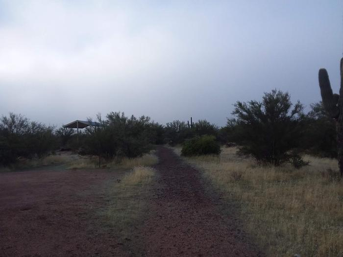 Windy Hill Campground Coati Site 020: walk way to siteWindy Hill Campground Coati Site 020