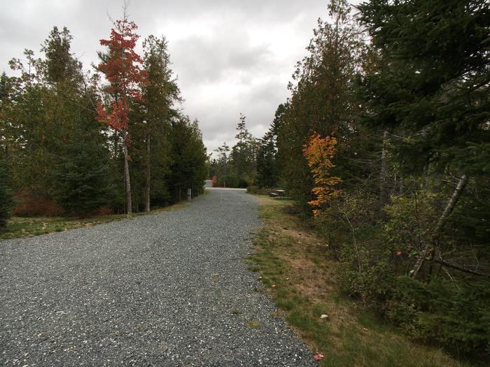 A photo of Site B19 of Loop B-Loop at Schoodic Woods Campground with Picnic Table, Electricity Hookup, Fire Pit, Water Hookup