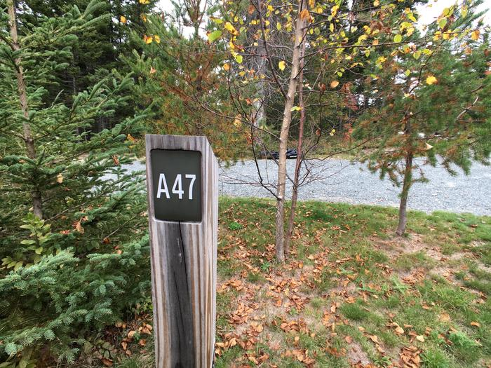 A photo of Site A47 of Loop A-Loop at Schoodic Woods Campground with Picnic Table, Electricity Hookup, Fire Pit