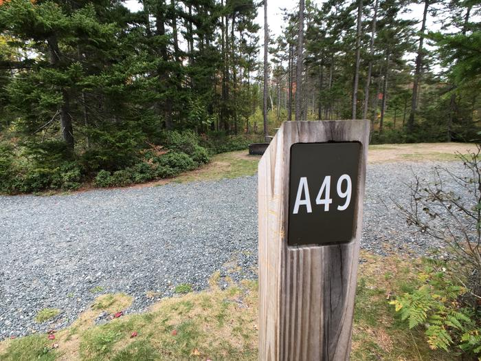 A photo of Site A49 of Loop A-Loop at Schoodic Woods Campground with Picnic Table, Electricity Hookup, Fire Pit, Water Hookup