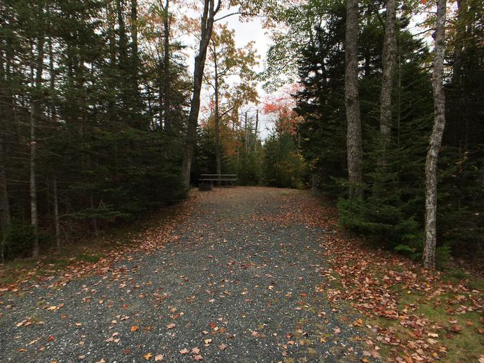 A photo of Site A34 of Loop A-Loop at Schoodic Woods Campground with Picnic Table, Electricity Hookup, Fire Pit