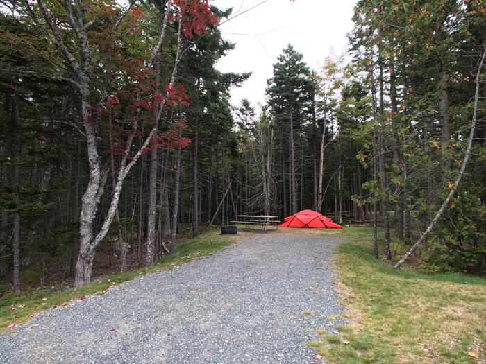 A photo of Site A39 of Loop A-Loop at Schoodic Woods Campground with Picnic Table, Electricity Hookup, Fire Pit
