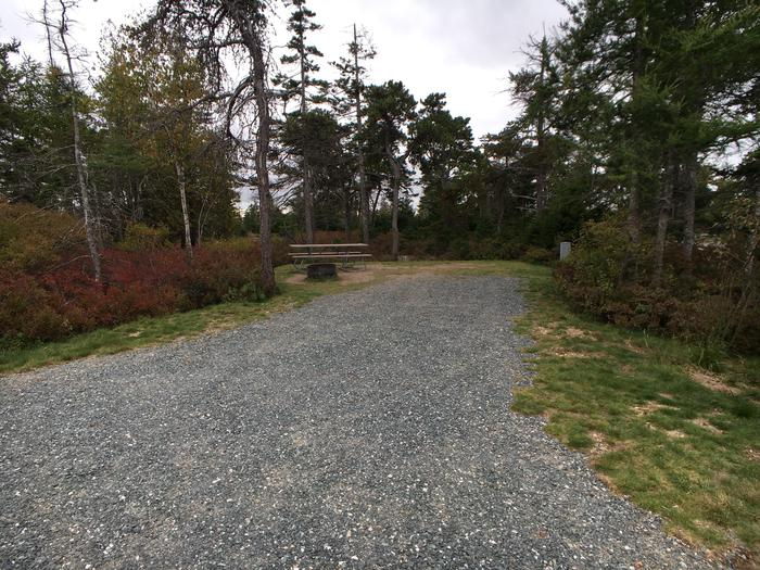 A photo of Site A15 of Loop A-Loop at Schoodic Woods Campground with Picnic Table, Electricity Hookup, Fire Pit