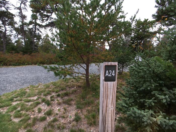 A photo of Site A24 of Loop A-Loop at Schoodic Woods Campground with Picnic Table, Electricity Hookup, Fire Pit