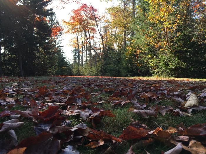 A photo of Site A35 of Loop A-Loop at Schoodic Woods Campground with Picnic Table, Electricity Hookup, Fire Pit