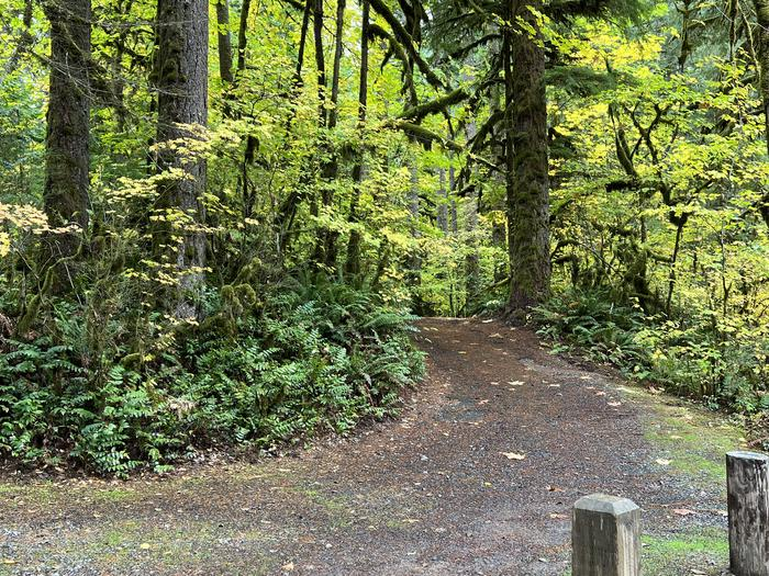 Trout Creek Campground located in the Willamette National Forest.Trout Creek Campground - Site 004 This is a pull thru site.  Please note, this site does have a  slope when pulling in as well as when driving out.