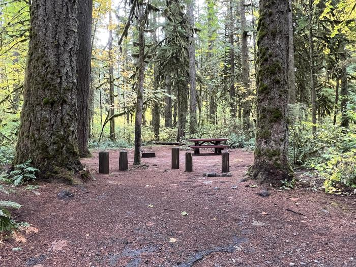 Trout Creek Campground located in the Willamette National Forest.Trout Creek Campground - Site 012