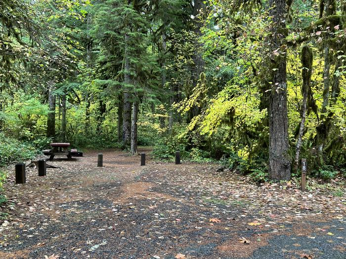 Trout Creek Campground located in the Willamette National Forest.Trout Creek Campground - Site 018