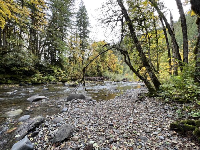 South Santiam RiverTrout Creek Campground