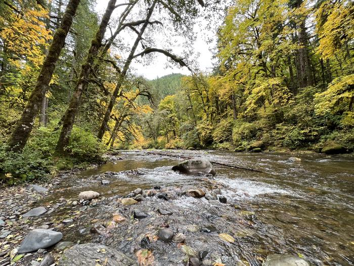 South Santiam River #2Trout Creek Campground