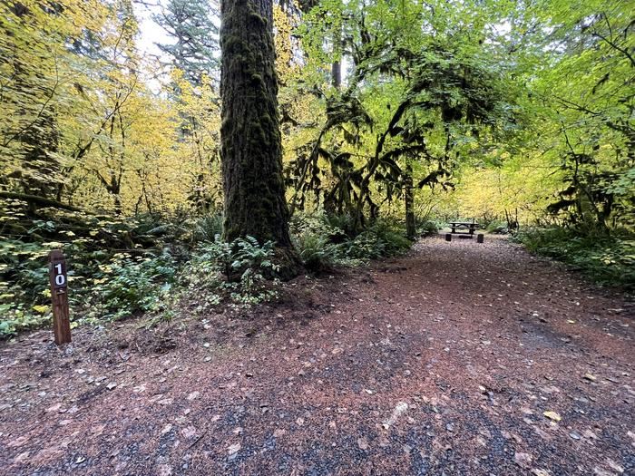 Yukwah Campground located in the Willamette National Forest.Yukwah Campground - Site 10
