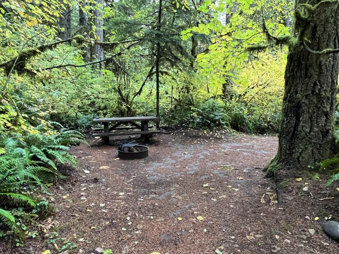 Picnic Table and Fire RingYukwah Campground - Site 012