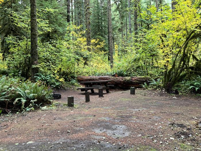 Yukwah Campground located in the Willamette National Forest.Yukwah Campground - Site 019