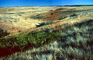 UL Bend Wilderness