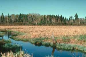 Tamarac Wilderness