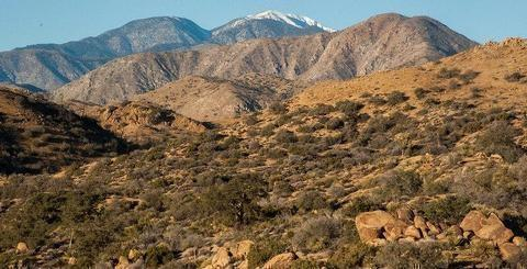 San Gorgonio WildernessDesert mountains covered with vegetation in the foreground and snow-capped mountains in the background.