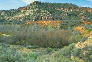 Kanab Creek Wilderness