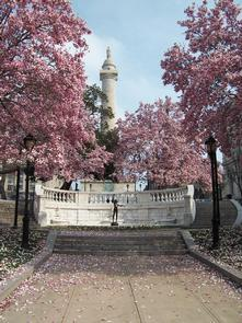 Cherry Blossoms at the Washington Monument in Mount Vernon Place