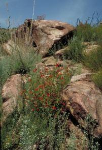 Agua Tibia Wilderness