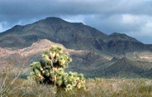 Tres Alamos Wilderness