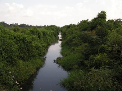 View Near Clarkton