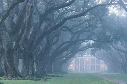 Foggy Oak Alley