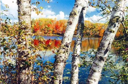 Pughole Birches